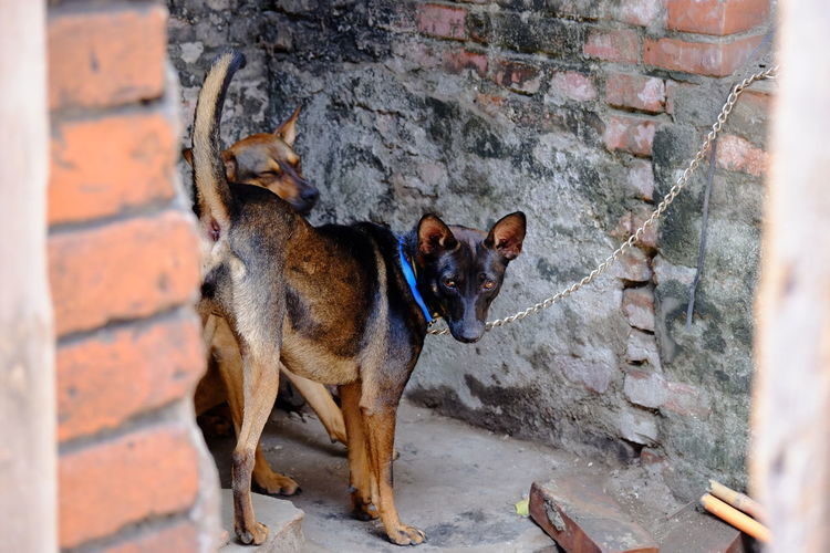 High angle view of dog standing by wall