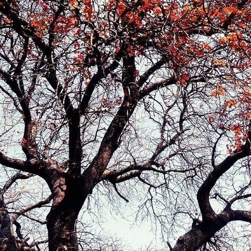 Mevsim yavas yavas bahara donuyor... Mart Bahar Doğa Nature color istanbul renk