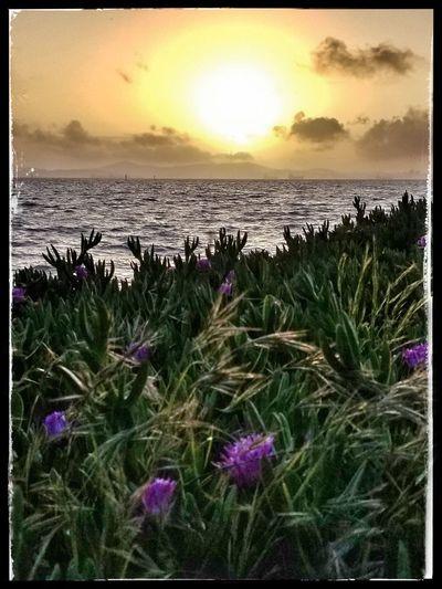 Sea Beach Water Purple Horizon Over Water