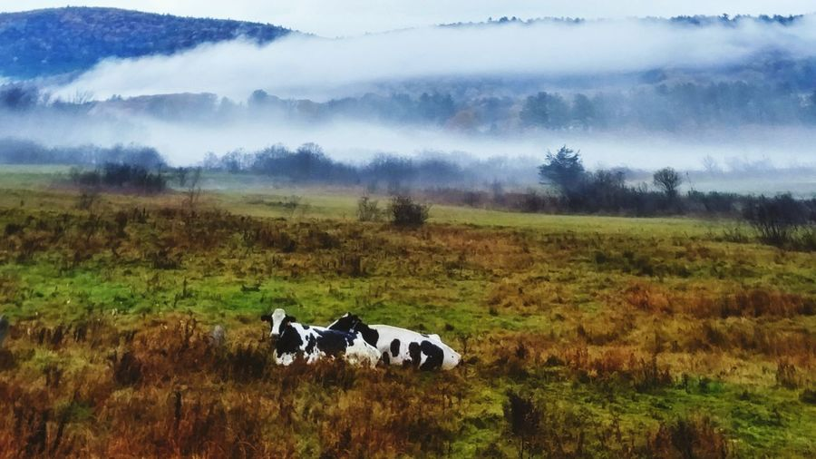 Morning Tranquility New England  Relaxing Fog Morning Outdoors Relaxing Moments Autmn Scenics Beauty In Nature Togetherness Clouds, Mountains, New England