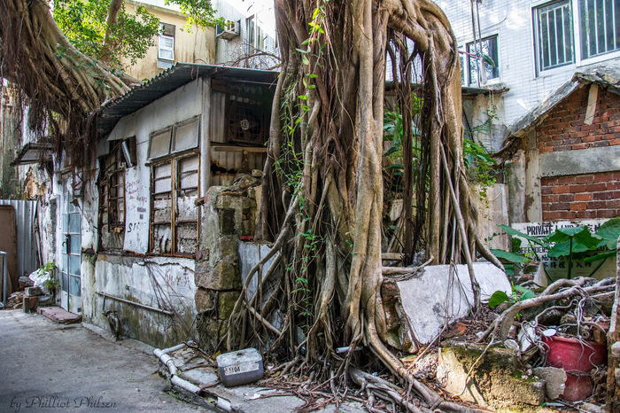 Architecture ASIA Building Exterior Built Structure Cheung Chau Day EyeEm Nature Lover House Houses Nature Nature_collection No People Outdoors Plant Travelblogger Tree Tree Treehouse Worldnomads