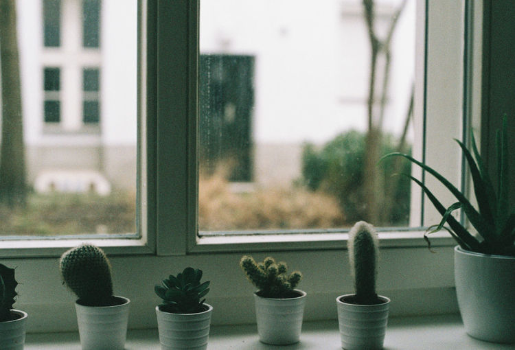 Potted cactus on window sill