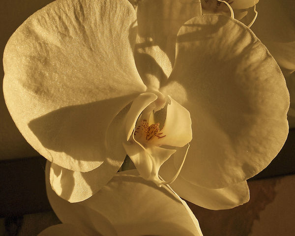 Close-up Cream Colored Exotic Flowers Flower Flower Head No People Orchid Outdoors