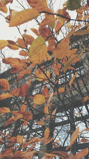 Autumn in Bochum // Vscocam Autumn Ruhrgebiet Taking Photos