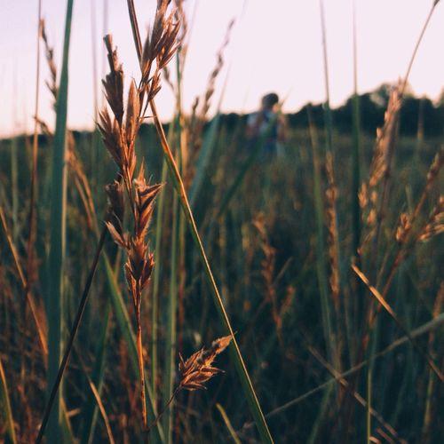 Grass of summer Holiday Summer Vibes Grass Nature
