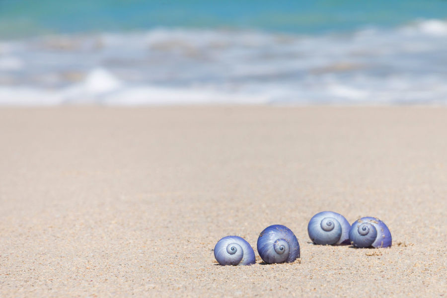 Sand Beach Sea Animal Shell No People Nature Wave Day Motion Water Shell Outdoors Beauty In Nature Tranquility Tranquil Scene Sunny Day Sunlight Focus On Foreground Selective Focus Sport Land Animal Wildlife Travel Travel Destinations Blue Animal