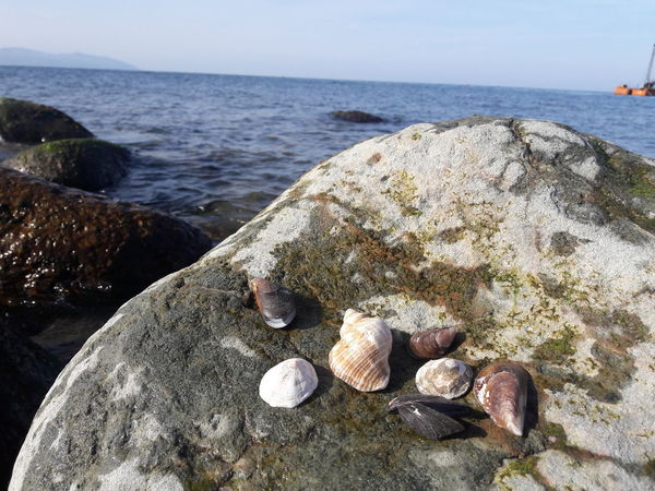 Beach Sea Sand Rock - Object Nature Pebble Outdoors Day No People Seashell Water Beauty In Nature Vacations Horizon Over Water Close-up Pebble Beach