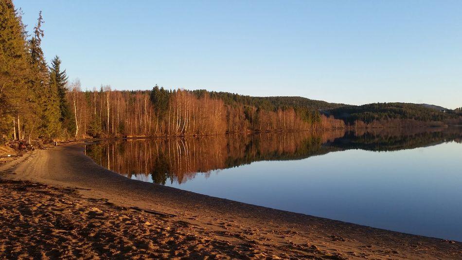 Taking A Walk Ångermanälven Enjoying The Sun November