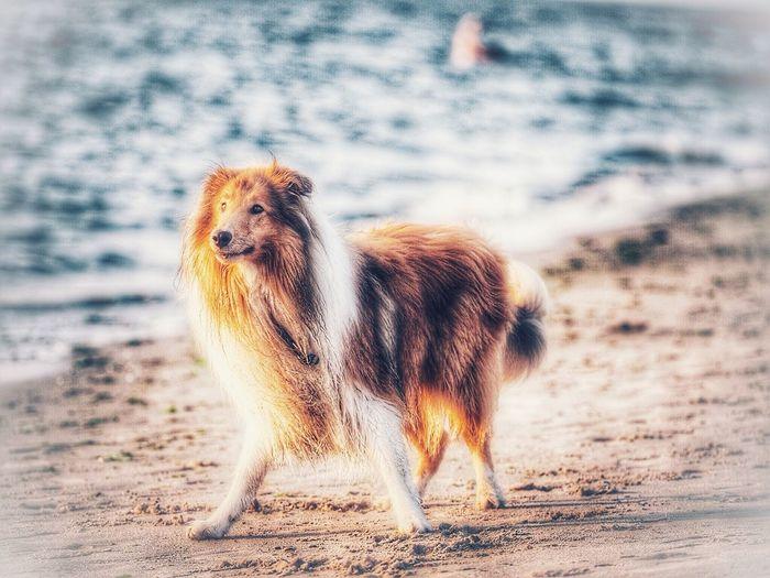 Dog Animal Animal Themes Mammal One Animal Animal Wildlife Animals In The Wild Vertebrate Nature Beach Sand Pets Outdoors