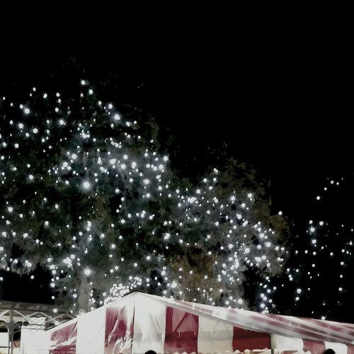 Romantic Twinkle Lights  Oktoberfest 2014