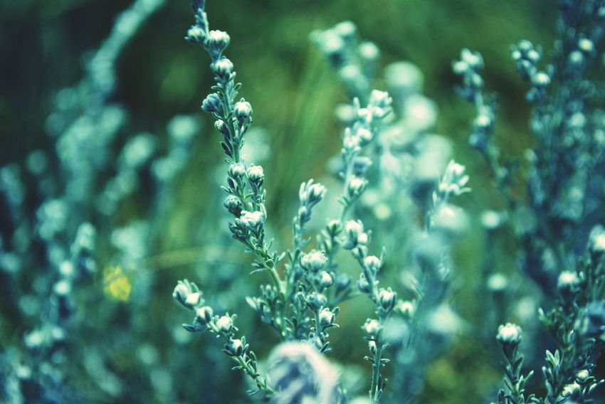 Nature Plant Beauty In Nature Green Color Flower Cold Temperature No People Day Macro зеленый макросъемка макро Природа красноярск Krasnoyarsk цветок  Enisey Енисей Blue макросьёмка