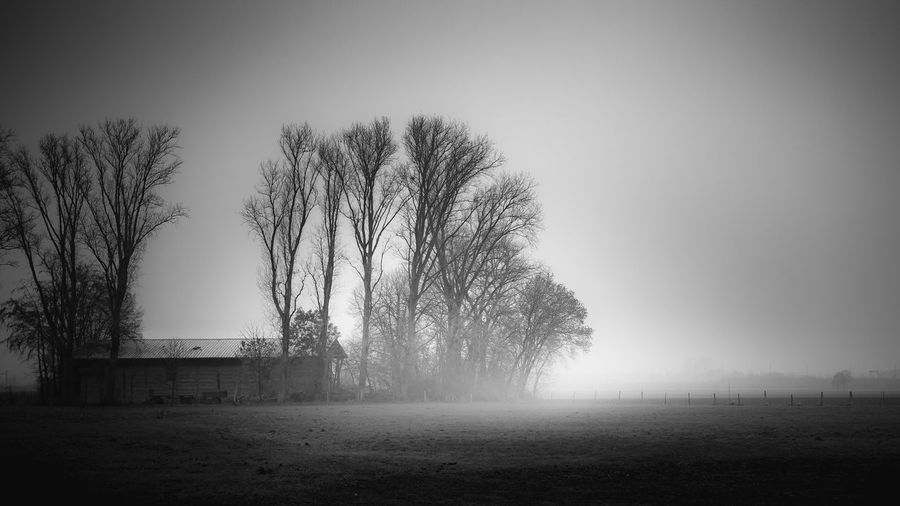 Tree Fog Sky Plant Architecture Landscape Field Land Nature Built Structure Bare Tree No People Tranquility Environment Tranquil Scene Building Exterior Scenics - Nature Day Outdoors Buiräbähnlisafari NRW