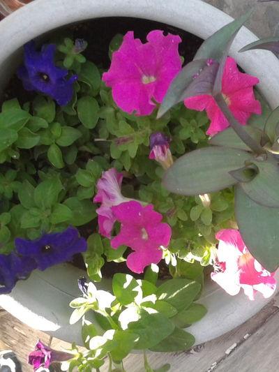 Purple, pink,