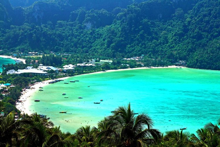 Beautiful sea at PP island, Krabi, Thailand Beautiful PP Island Thailand Travel Andaman Sea Bay Beach Beauty In Nature Clear Water Forest Green Color High Angle View Landscape Nature Ocean Palm Tree Plant Sand Scenics - Nature Sea Tranquil Scene Travel Destinations Viewpoint Water