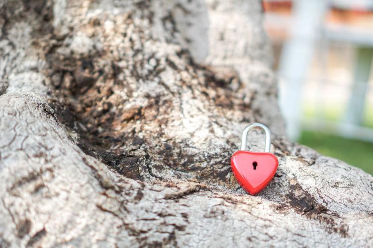 Close-up of heart shaped padlock on tree trunk
