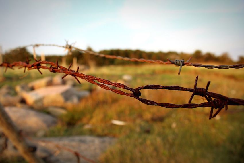 Loop Protection Safety Focus On Foreground Close-up Fence Barbed Wire Sky Branch Plant Growth Nature Day Spiked Non-urban Scene Outdoors Remote No People Tranquil Scene Tranquility Thorn