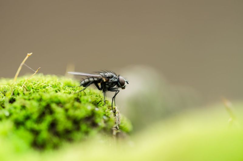 Close-up of insect on moss