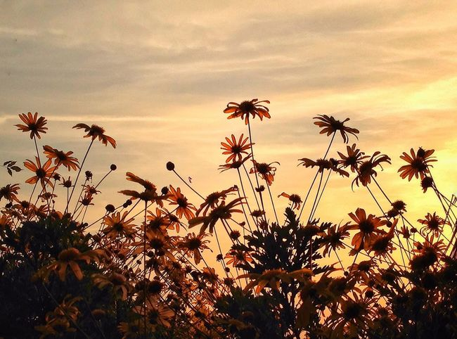 Growth Flower Nature Sky Beauty In Nature Plant Outdoors Sunset Cloud - Sky Day Flower Head Freshness Fragility Palm Tree Tree Close-up