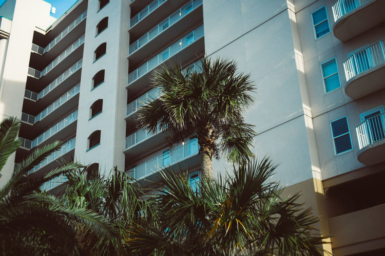 Apartment building Building Exterior Built Structure Architecture Palm Tree Tropical Climate Building Tree Plant Low Angle View Growth Nature Window Day City No People Outdoors Sky Residential District Modern Sunlight Apartment Palm Leaf Coconut Palm Tree Apartment Buildings Apartment Building Palm Tree Palm Trees Palmtree