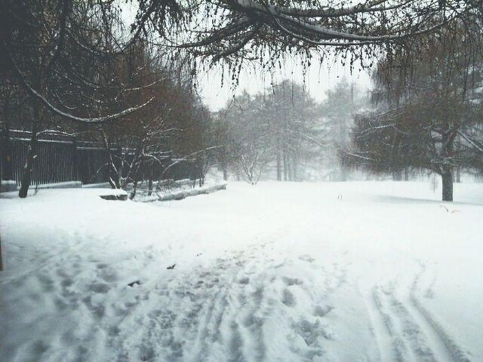 snow day❄ First Eyeem Photo