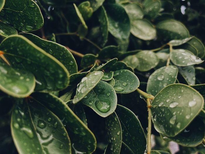 Green and rain