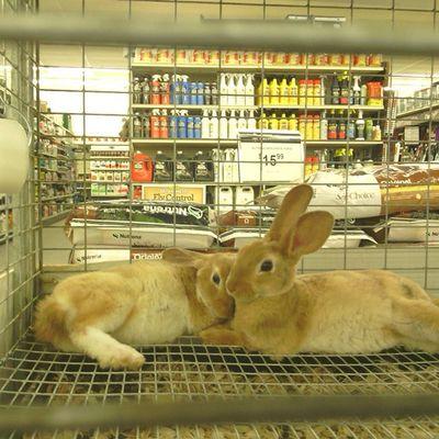 Cute Bunnies Cuddle LovinLife Love