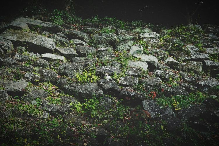 Plants growing on rock