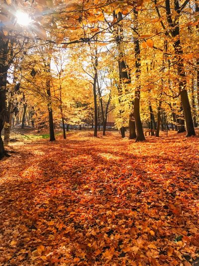 Autumn Nature Orange Color Change Tree Leaf Plant Part Falling Field Beauty In Nature Outdoors Day Fence No People Leaves Sunlight Sport Plant Sky Land
