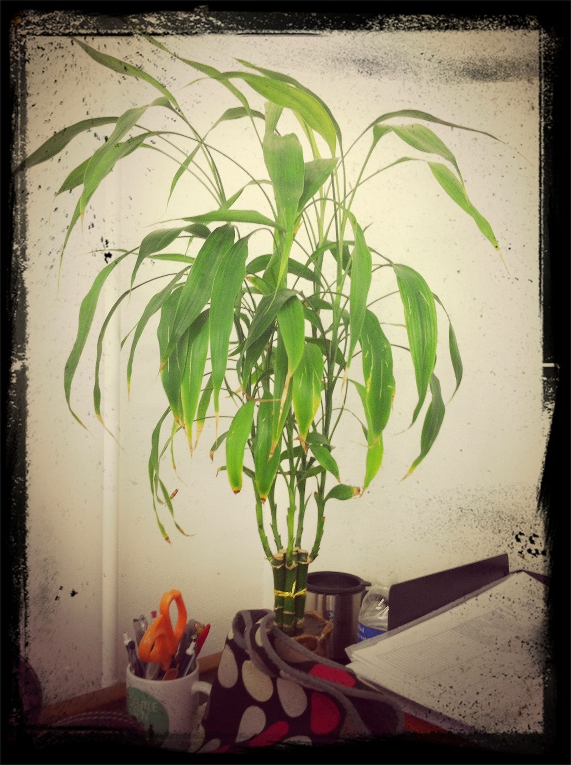 indoors, leaf, potted plant, plant, table, growth, vase, freshness, green color, close-up, wall - building feature, auto post production filter, still life, transfer print, home interior, stem, flower pot, high angle view, no people, flower