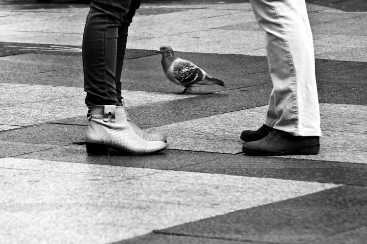 City Composition Lines Bird Blackandwhite Casual Clothing Contrast Human Body Part Human Leg Legs Low Section Pigeon Shoe Standing Street Streetphotography Talk Zigzag