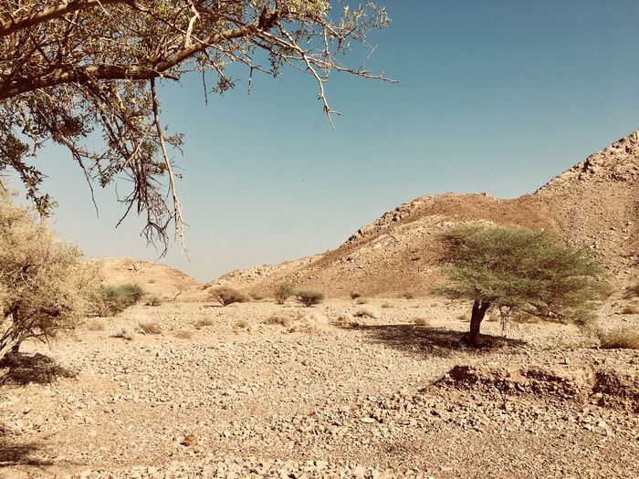 Omani desert Oman Nature Outdoors Clear Sky Day Sky No People
