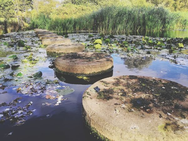 stepping stones Honor 10 Blue Sky Blue Sky And Clouds United Kingdom Bushes Grass Flowers Woods Stepping Stones Stepping Stone Water Lake Reflection Close-up Lily Pad Water Lily Floating Pond Floating On Water Countryside Stream Standing Water Shore Leaves Lily A New Beginning