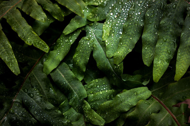 Drops Plant Plants 🌱 Rain Drop Fern Green Color Helecho Lluvia Nature Verde Water