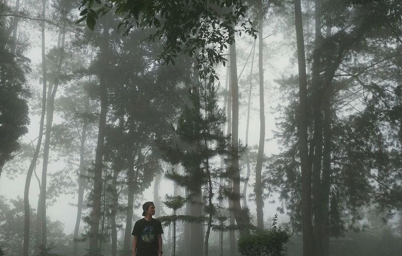 fog Tree Men