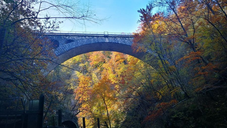 Tree Window Outdoors Day Autumn No People Architecture Low Angle View Sky Nature Close-up City Bridge - Man Made Structure Forest Autumn Sunlight