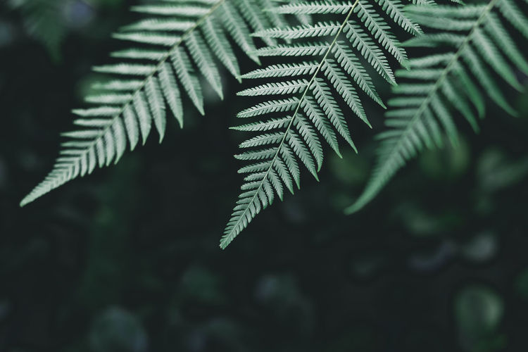 Beauty In Nature Close-up Coniferous Tree Day Fern Focus On Foreground Fragility Freshness Green Color Growth Leaf Leaves Natural Pattern Nature Needle - Plant Part No People Outdoors Pine Tree Plant Plant Part Selective Focus Tranquility Tree