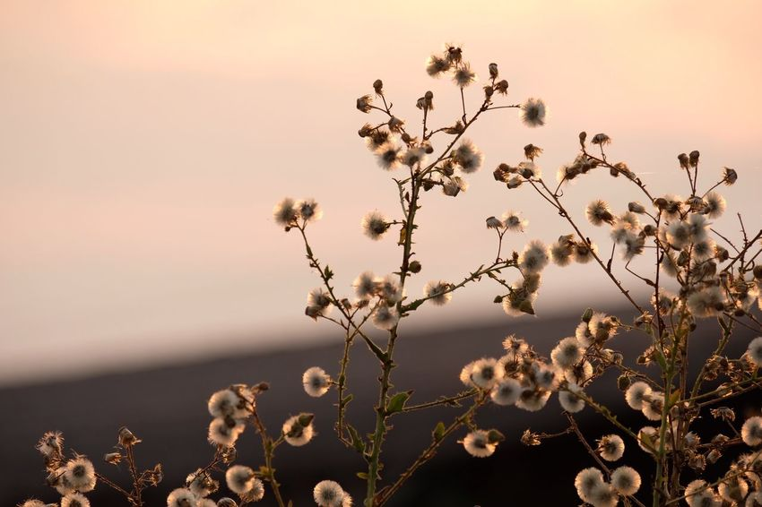 EyeEm Selects Plant Beauty In Nature Growth Sky Flower Flowering Plant Water Outdoors Focus On Foreground Scenics - Nature Fragility Freshness Sunset Vulnerability  Close-up Tranquility Nature No People Tranquil Scene Day