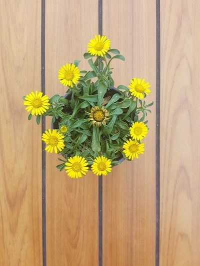 High angle view of yellow flowers on wooden table