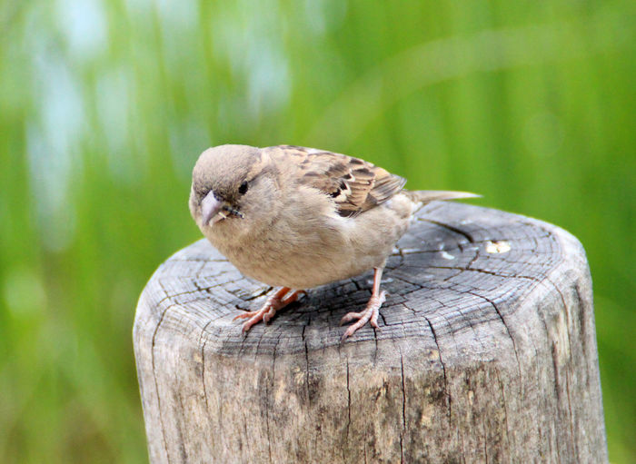 Sparrow with Worm Beauty In Nature Bird Bird Photography Day Focus On Foreground Nature Sparrow Sparrow Bird Spatz Sperling