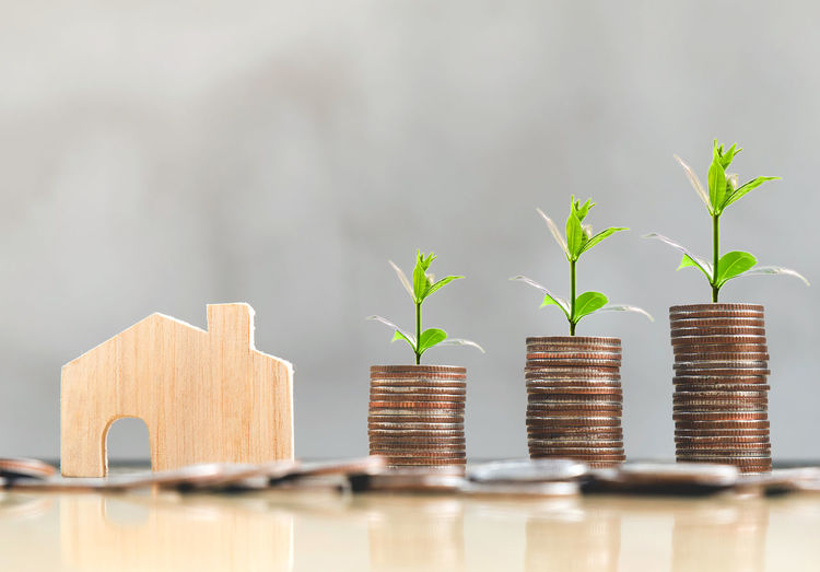 Beginnings Business Coin Currency Day Development Economy Finance Growth Indoors  Investment Leaf Nature No People Plant Plant Part Responsibility Savings Seedling Selective Focus Stack