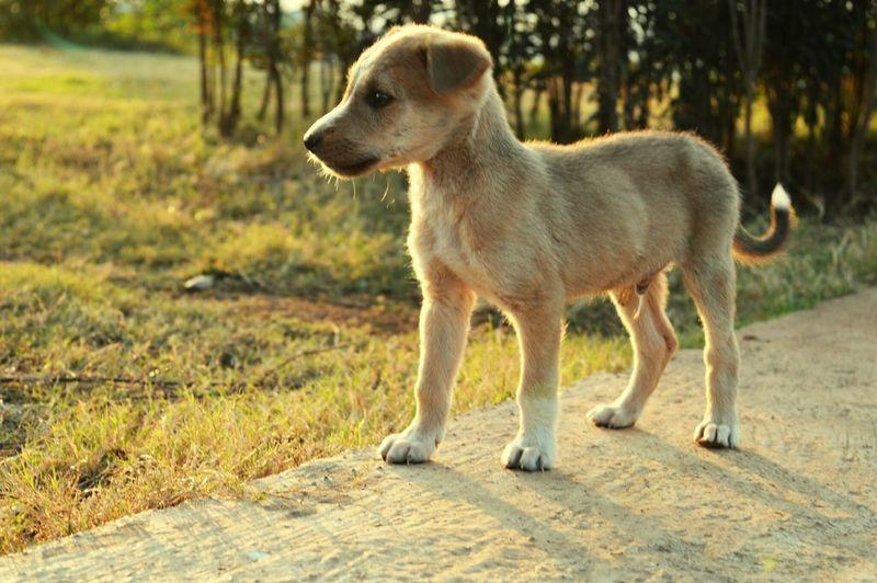 First Eyeem Photo Cute Puppy Animal Photography Dog❤ Pet Life