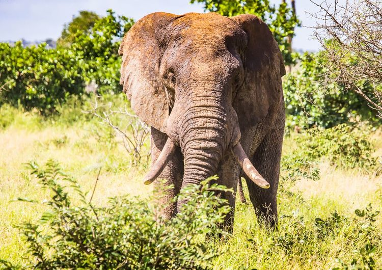 Elephant in a forest