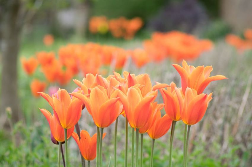 Flower Petal Growth Plant Beauty In Nature Nature Orange Color Freshness Flower Head Fragility Blooming No People Focus On Foreground Outdoors Close-up Day