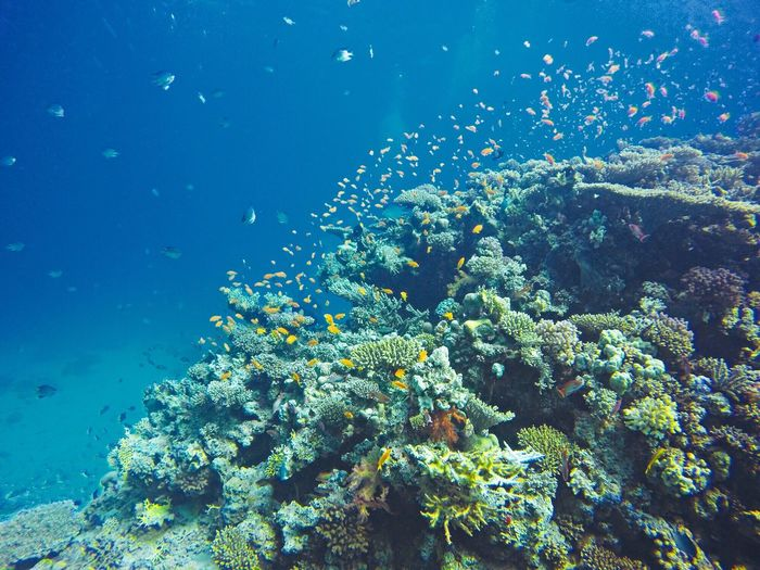 Fish and corals in blue sea