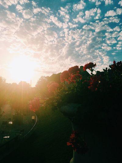 Beautiful Eiffel Tower Garden Vscocam