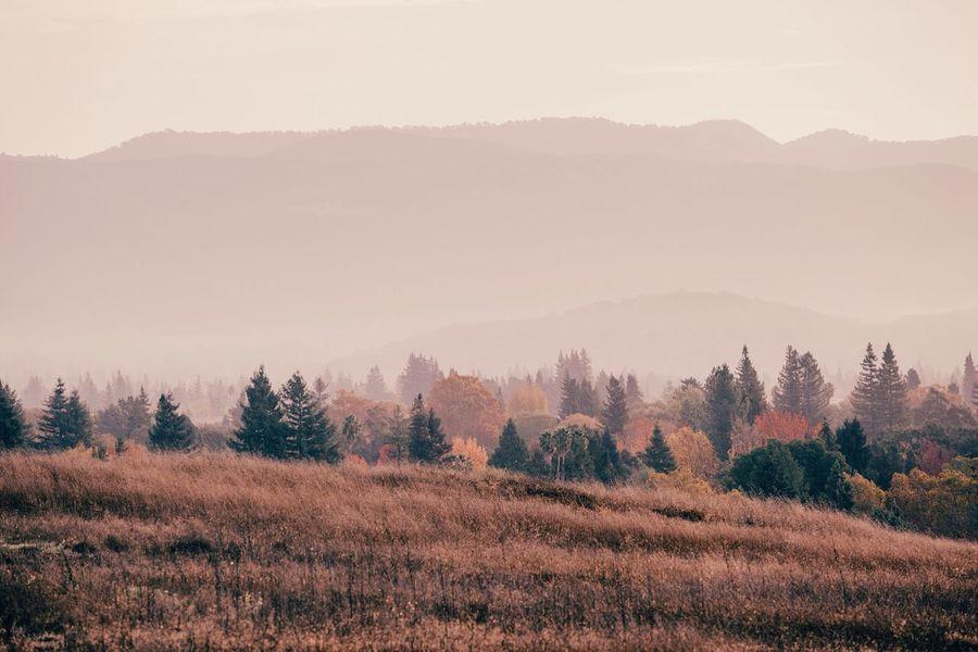 Autumn Landscape Hillside Misty Morning