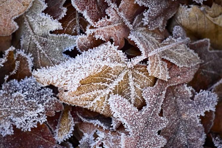 frozen leafs on