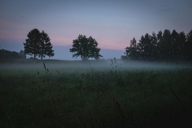 Fog over gras
