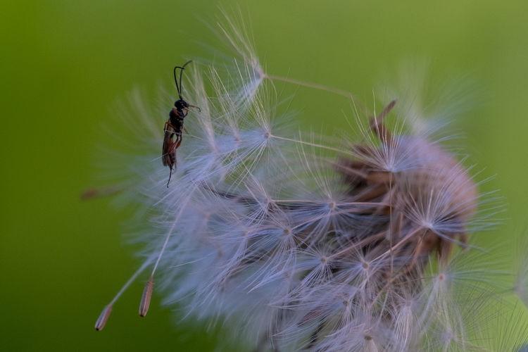 Close-up of caterpillar on dandelion
