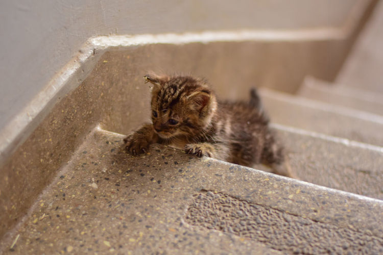 New baby kitten Cats Of EyeEm EyeEm Best Shots Animal Wildlife Animals In The Wild Architecture Cat Cat Lovers Day Domestic Domestic Animals Domestic Cat Feline Kitten Kittens Of Eyeem Mammal No People One Animal Outdoors Pets Rodent Staircase Young Animal